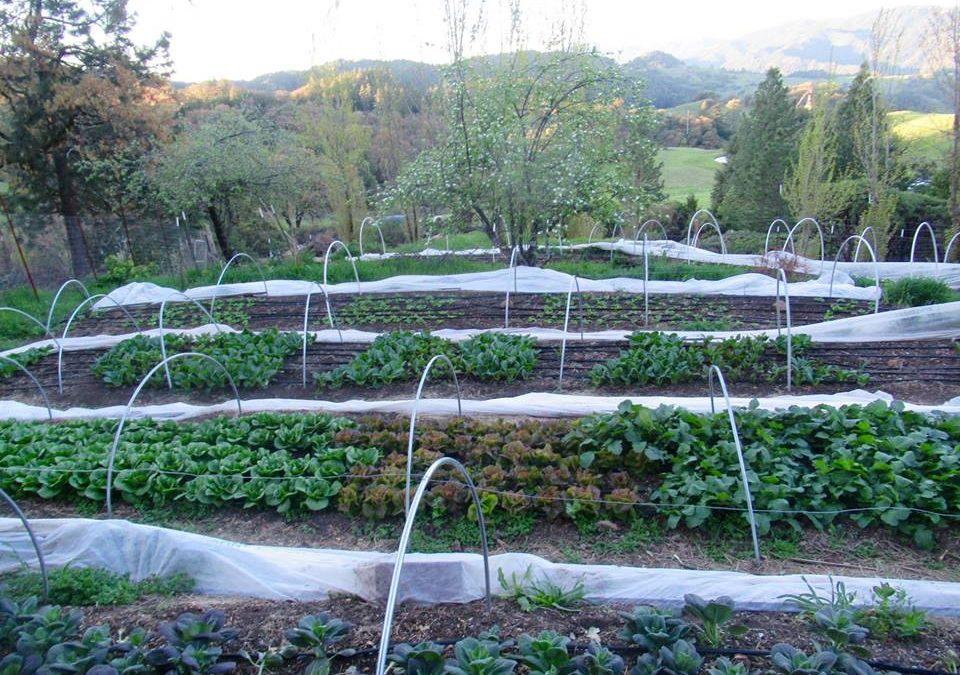 HappyDay Farms CSA Newsletter Week 16, April 22nd