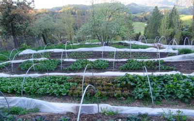HappyDay Farms CSA Newsletter Week 16, April 22nd